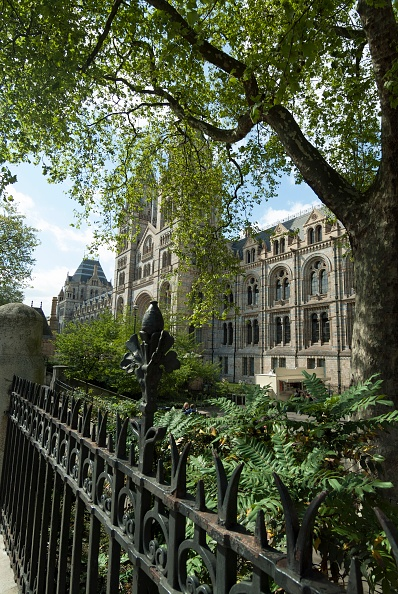 Natural History Museum - London「Nat Hist Museum」:写真・画像(11)[壁紙.com]