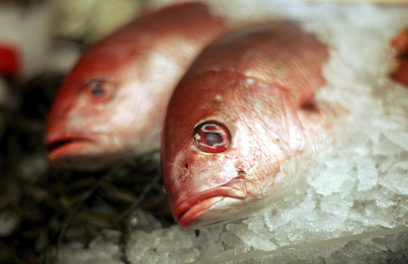 Fish「New Study Confirms Health Benefits Of Seafood Outweigh Risks」:写真・画像(19)[壁紙.com]