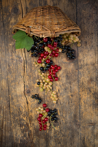 Black currant「Wickerbasket and black, red and white currants on dark wood」:スマホ壁紙(6)