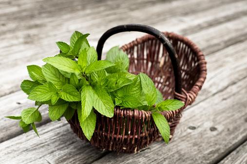 Mint Leaf - Culinary「Wickerbasket of fresh peppermint」:スマホ壁紙(1)