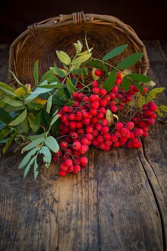 Rowanberry「Wickerbasket and rowanberries on dark wood」:スマホ壁紙(7)
