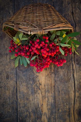 Rowanberry「Wickerbasket and rowanberries on dark wood」:スマホ壁紙(14)