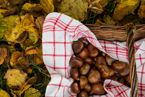 栗「Wickerbasket of sweet chestnuts on autumn leaves in the garden」:スマホ壁紙(6)