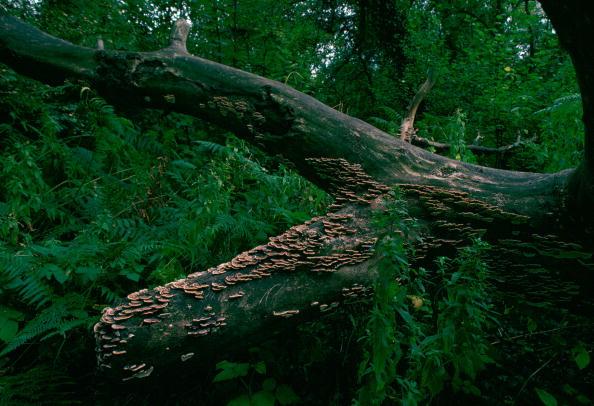Tree「Bracket Fungus」:写真・画像(16)[壁紙.com]