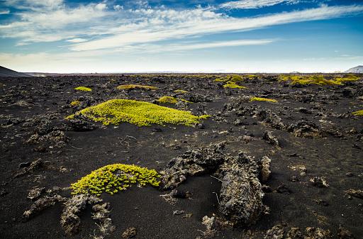 North Iceland「Iceland, Myvatn, Sparse mosses on volcanic rock」:スマホ壁紙(11)