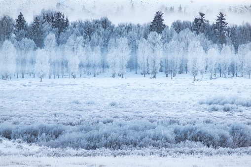Fog「Hoar frosted trees in Jackson, Wyoming, United States of America」:スマホ壁紙(6)