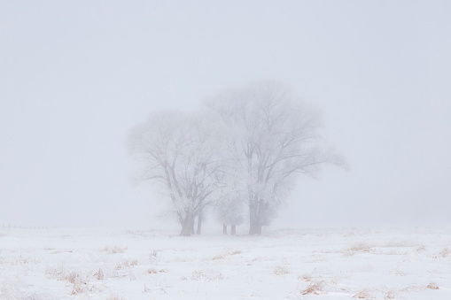 Frost「Hoar frosted barns and trees in Jackson, Wyoming, United States of America」:スマホ壁紙(3)