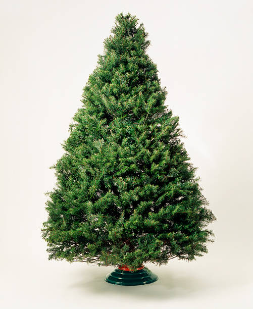 Undecorated Christmas tree:スマホ壁紙(壁紙.com)