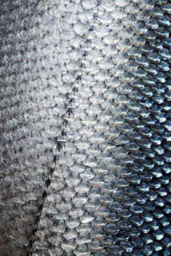 魚「サーモン」:スマホ壁紙(14)