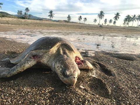 ガラス「Dead turtle ecocide」:スマホ壁紙(5)