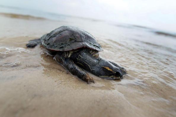Gulf of Mexico「Massive Oil Slick Threatens U.S. Gulf Coast」:写真・画像(13)[壁紙.com]