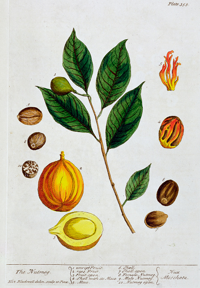 Spice「Nutmeg 1782」:写真・画像(10)[壁紙.com]