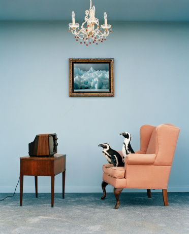 Part of a Series「Jackass penguins on chair watching television, side view」:スマホ壁紙(13)