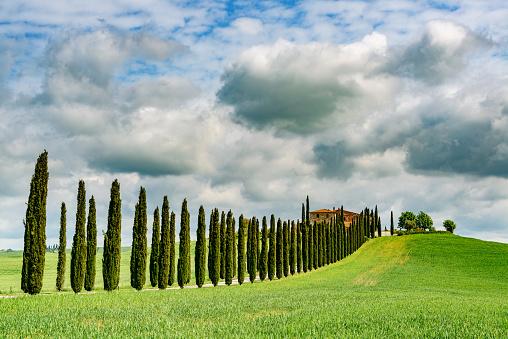 Boulevard「Cypress trees in Tuscany. Location: Chianti Region, Tuscany, Italy, Europe」:スマホ壁紙(18)