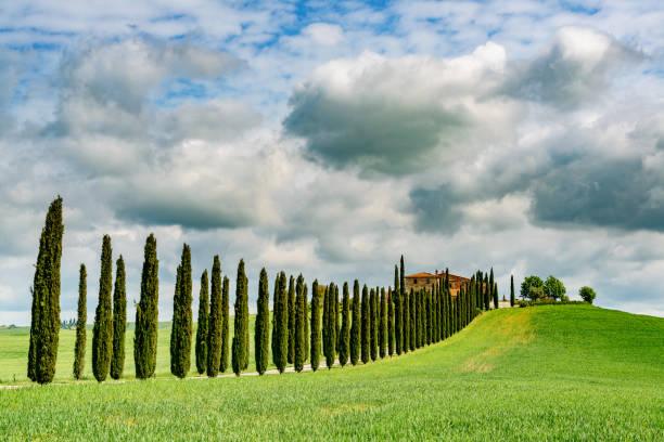 Cypress trees in Tuscany. Location: Chianti Region, Tuscany, Italy, Europe:スマホ壁紙(壁紙.com)