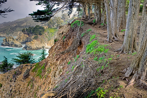 Julia Pfeiffer Burns State Park「Cypress Trees Overlooking McWay Cove」:スマホ壁紙(15)
