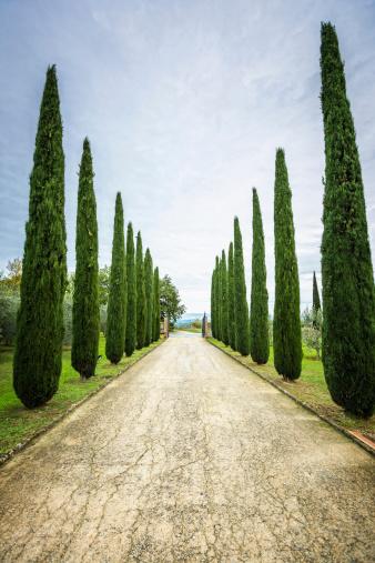 Treelined「Cypress trees,Tuscany, Italy」:スマホ壁紙(15)