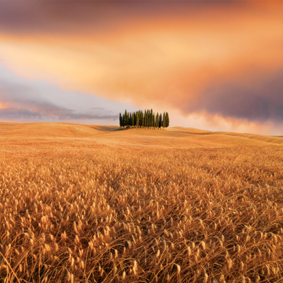 Val d'Orcia「Cypress Trees in a Tuscan landscape」:スマホ壁紙(18)