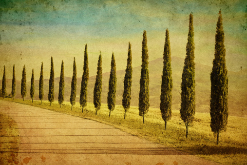 Auto Post Production Filter「Cypress trees in Tuscany」:スマホ壁紙(2)