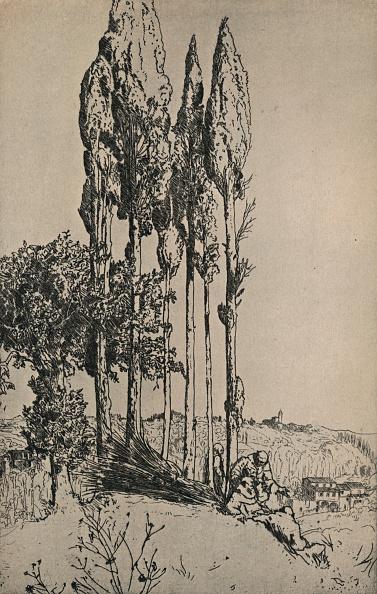 Tuscany「Cypress Trees Near Siena」:写真・画像(17)[壁紙.com]