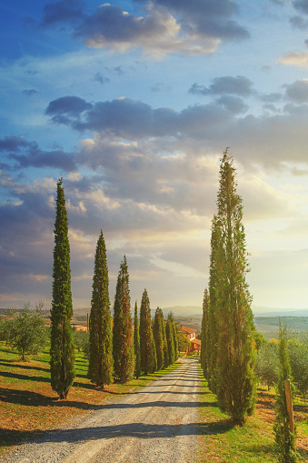 Val d'Orcia「Cypress trees along a country road in Tuscany, Italy」:スマホ壁紙(7)