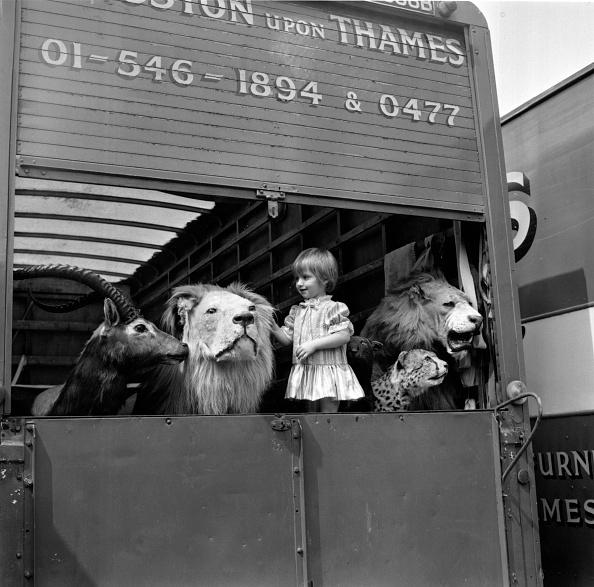Stuffed「Among Lions」:写真・画像(4)[壁紙.com]