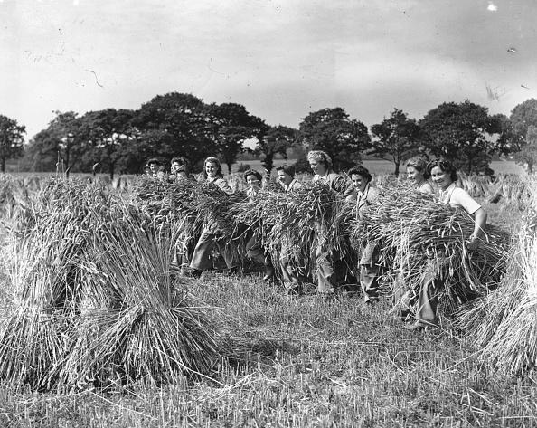 Land「Land Army Harvesting」:写真・画像(9)[壁紙.com]
