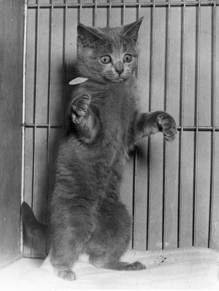 Monty Fresco「Perky Puss」:写真・画像(12)[壁紙.com]