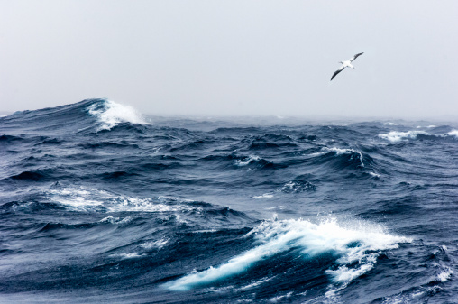 Bird「Wandering Albatross in flight over a rough sea」:スマホ壁紙(17)