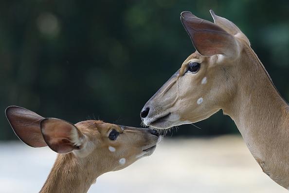 動物「Singapore Zoo Celebrates Its 40th Anniversary」:写真・画像(8)[壁紙.com]