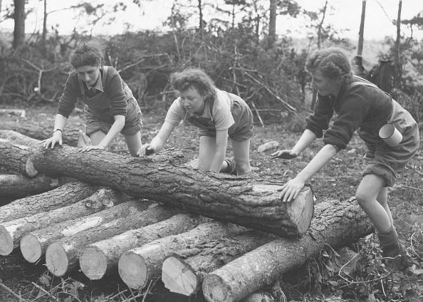 Log「Piling Logs」:写真・画像(14)[壁紙.com]