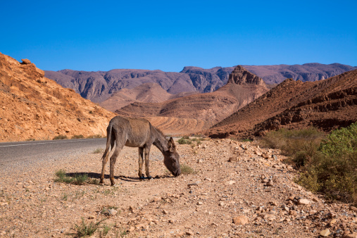 Atlas Mountains「Road trip [往復]:モロッコ、アトラス山脈」:スマホ壁紙(13)