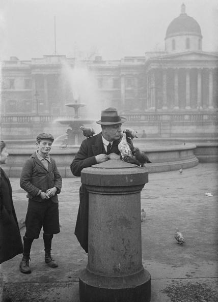 Beak「Pigeons Trafalgar square」:写真・画像(9)[壁紙.com]