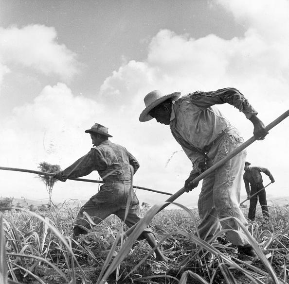 1940-1949「Sugar Fields」:写真・画像(17)[壁紙.com]