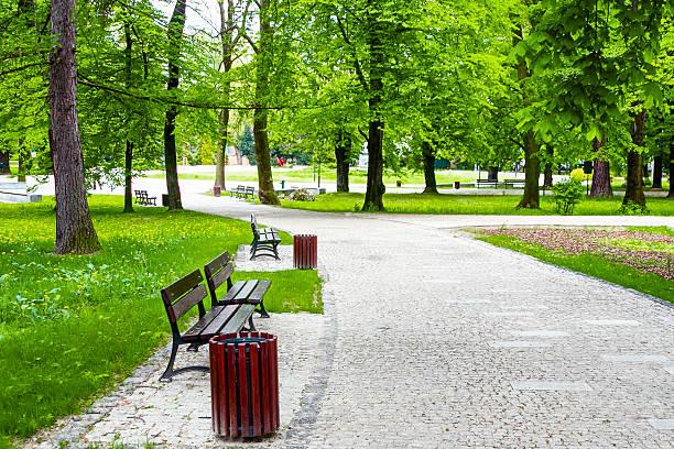 Avenue in the green park:スマホ壁紙(壁紙.com)