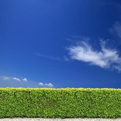 Branch - Plant Part「backyard bush fence over clear sky」:スマホ壁紙(6)