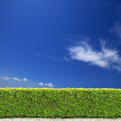 Hedge「backyard bush fence over clear sky」:スマホ壁紙(2)