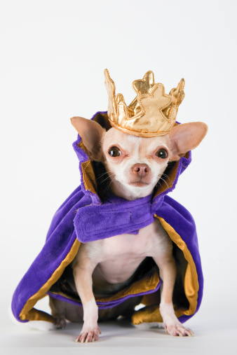 King - Royal Person「Chihuahua wearing a purple robe and crown」:スマホ壁紙(6)