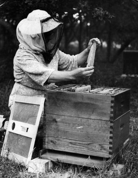 Honey「Collecting Honey」:写真・画像(19)[壁紙.com]
