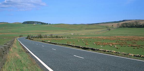 Grass「A68, Northumberland, United Kingdom」:写真・画像(14)[壁紙.com]