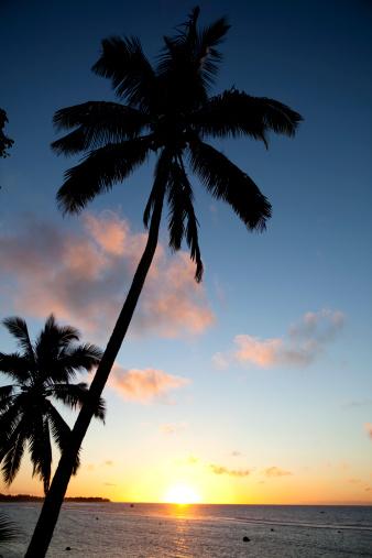 Palm tree「パーム&夕日」:スマホ壁紙(6)