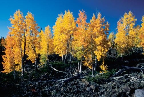 秋「Low angle view of tall trees, Cedar Breaks National Monument, Utah, USA」:スマホ壁紙(11)