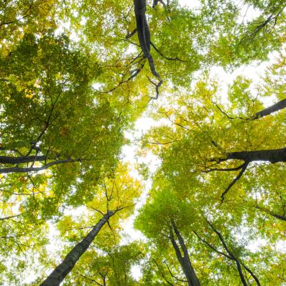 風景(季節別)「Low angle view of tall trees」:スマホ壁紙(18)