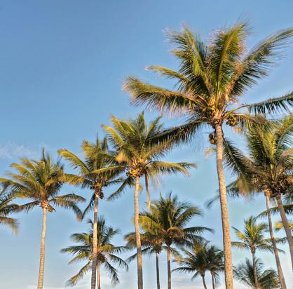 Grove「Low angle view of palm trees」:スマホ壁紙(1)