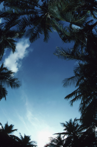 Frond「Low Angle view of palm trees and sky , Florida , North America」:スマホ壁紙(11)