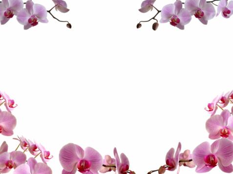 Floral Pattern「Orchids frame/ border」:スマホ壁紙(8)