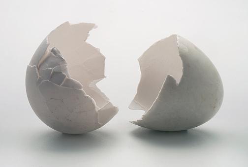 Animal Egg「Egg shells」:スマホ壁紙(10)