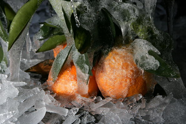 Orange - Fruit「Cold Snap Endangers California Citrus Crop」:写真・画像(15)[壁紙.com]