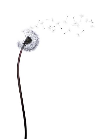 Fragility「Dandelion」:スマホ壁紙(9)