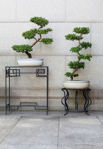 Zhongshan - Guangdong Province「Chinese ancient style ornamental potted plants」:スマホ壁紙(11)